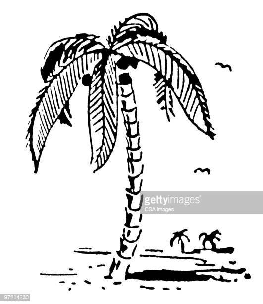 palm trees on beach - tree trunk stock illustrations, clip art, cartoons, & icons