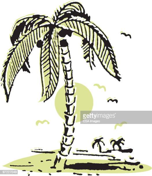 palm trees on beach - pacific islands stock illustrations