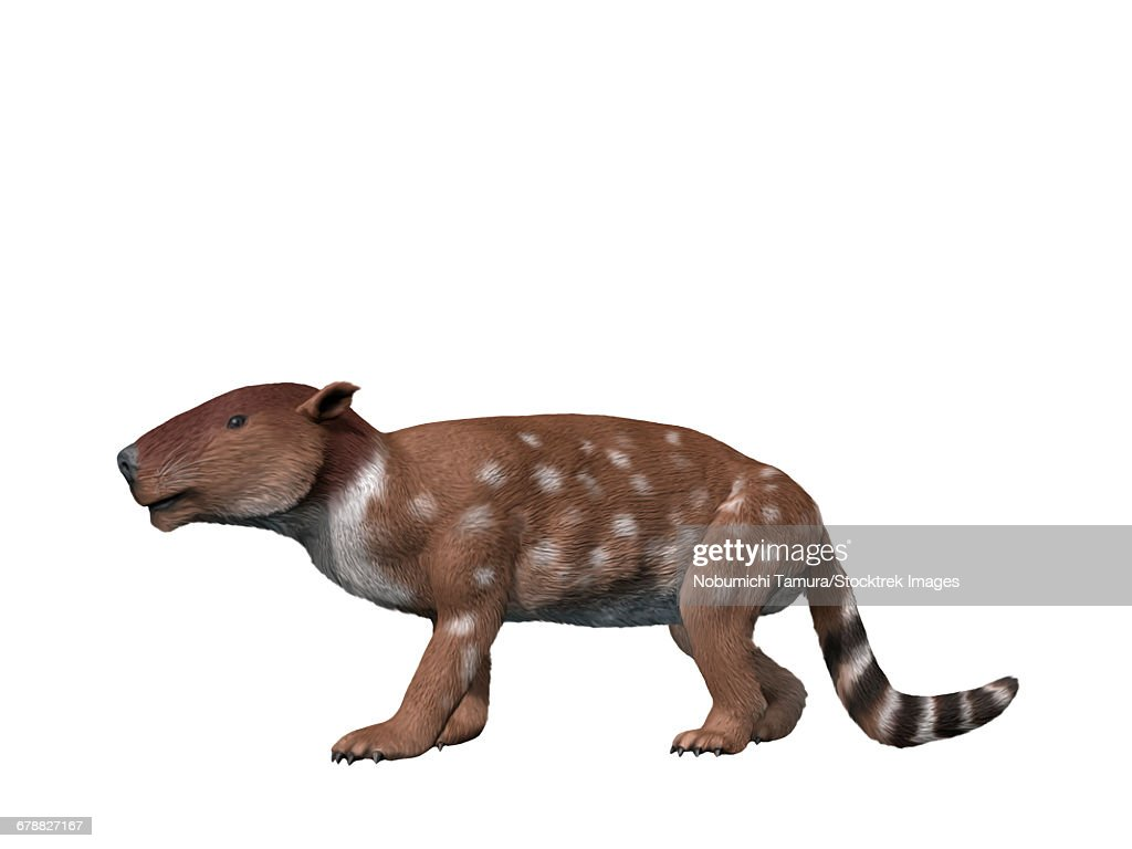 Pantolambda bathmodon is a pantodont from the Paleocene epoch of New Mexico. : stock illustration