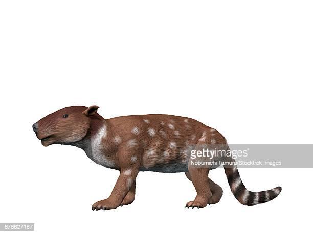 Pantolambda bathmodon is a pantodont from the Paleocene epoch of New Mexico.
