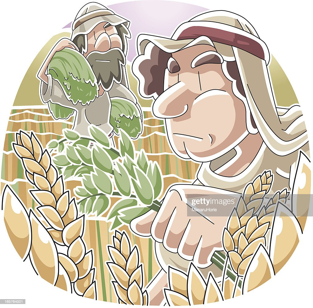 Parable of the Wheat and Tares : stock illustration