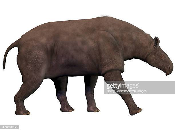 Paraceratherium, an extinct rhinoceros-like mammal.
