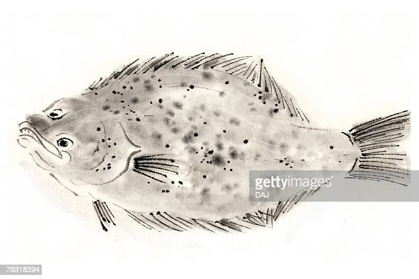 Paralichthys Olivaceus, Ink Brush Painting