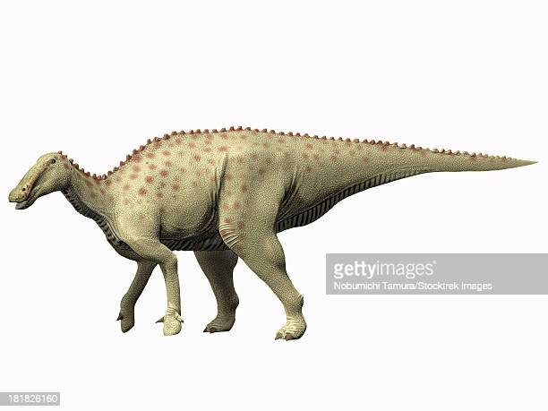 pararhabdodon isonensis, late cretaceous of spain. - hadrosaurid stock illustrations, clip art, cartoons, & icons