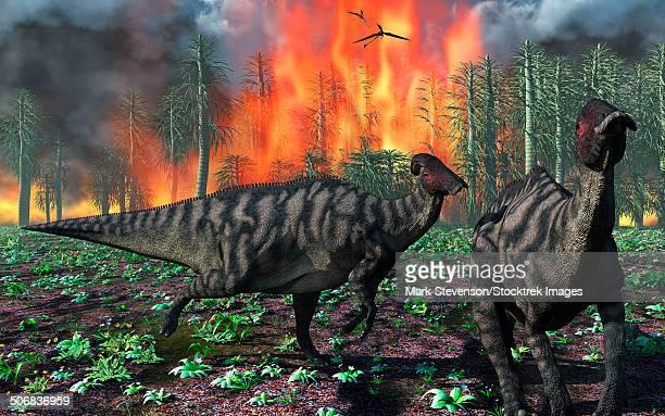 Parasaurolophus duckbill dinosaurs fleeing a deadly forest fire.