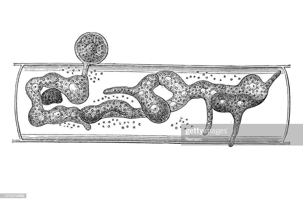 hogyan lehet megszabadulni a parazitáktól a szőnyegen