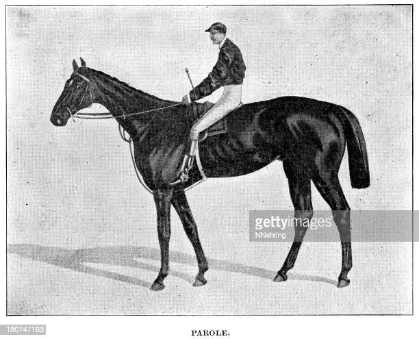 パロール race horse 刻印 - named animal点のイラスト素材/クリップアート素材/マンガ素材/アイコン素材