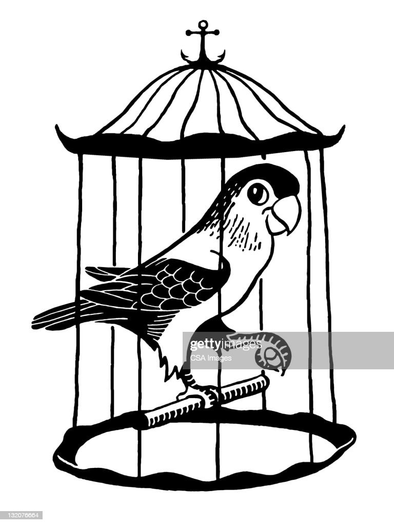 Parrot In Cage High Res Vector Graphic Getty Images