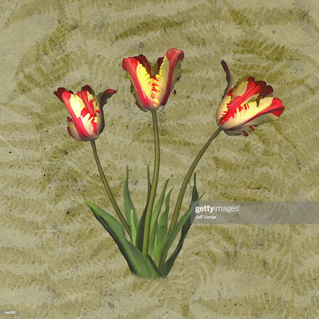 Parrot Tulips on Fern Background : Stock Illustration