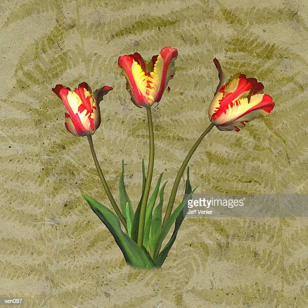 Parrot Tulips on Fern Background