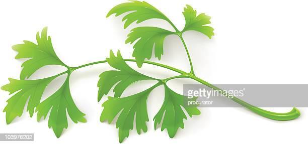 stockillustraties, clipart, cartoons en iconen met parsley - peterselie