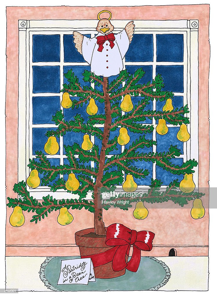 Partridge in a Pear Tree : Illustration