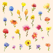 set watercolor little flowers multicolored daisies