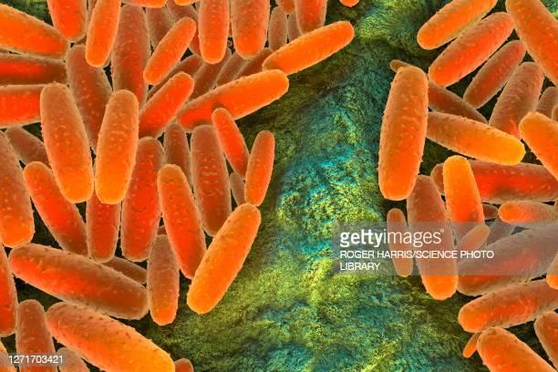 pasteurella multocida bacteria, illustration - zoonotic diseases stock illustrations