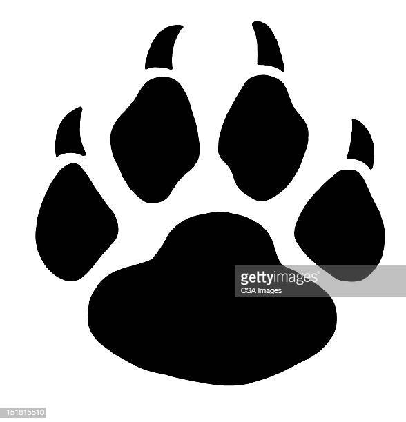 paw print - wildcat animal stock illustrations, clip art, cartoons, & icons