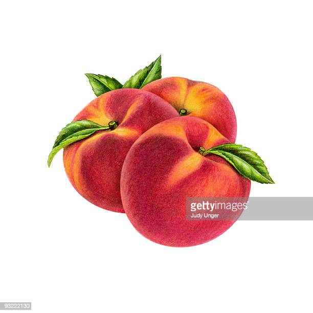 peach group of 3 - food stock illustrations