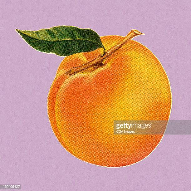 peach - old fashioned stock illustrations