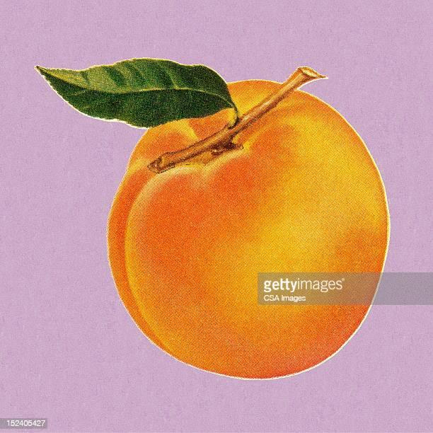 peach - peach stock illustrations