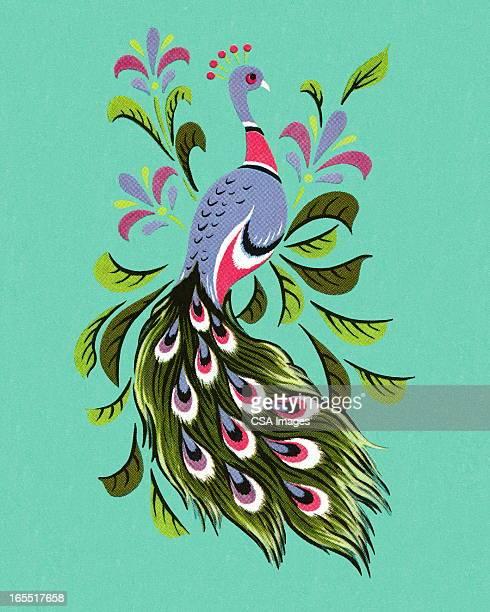 illustrations, cliparts, dessins animés et icônes de peacock - paon