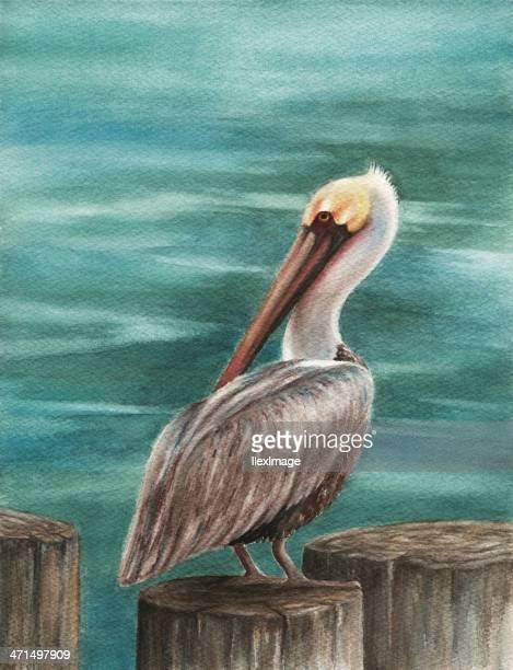 pelican on pier - pelican stock illustrations