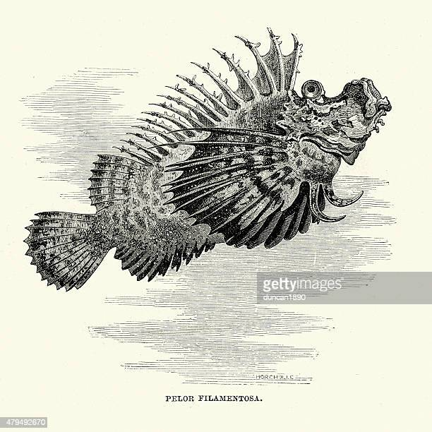 pelor filamenteux - animal spine stock illustrations, clip art, cartoons, & icons