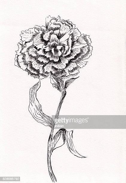 pen sketch ink flower carnations hand drawn - carnation flower stock illustrations, clip art, cartoons, & icons