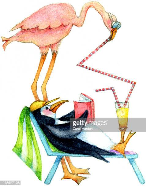 a penguin lounging and reading a book while a flamingo takes a drink from a straw - two animals stock illustrations