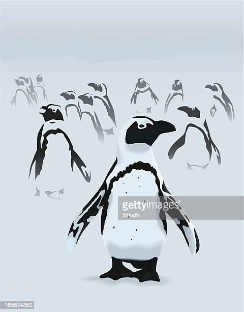 penguins - african penguin stock illustrations