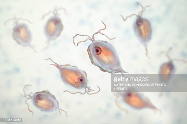 Pentatrichomonas intestinal parasite, illustration