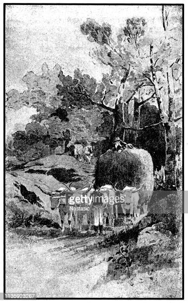 People harvesting wheat with ox cart