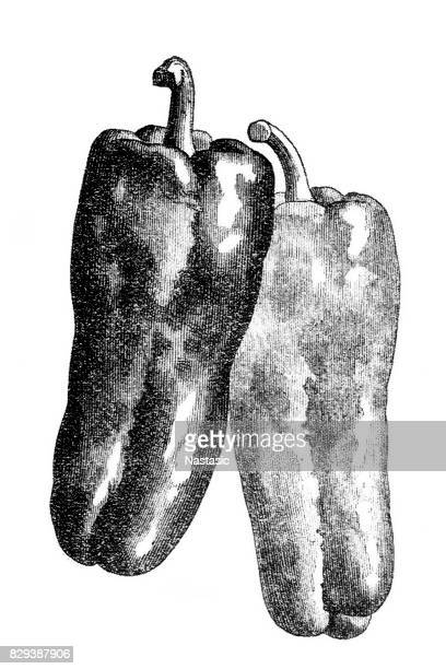 peppers - bell pepper stock illustrations, clip art, cartoons, & icons