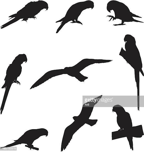 Perché des perroquets et d'autres oiseaux