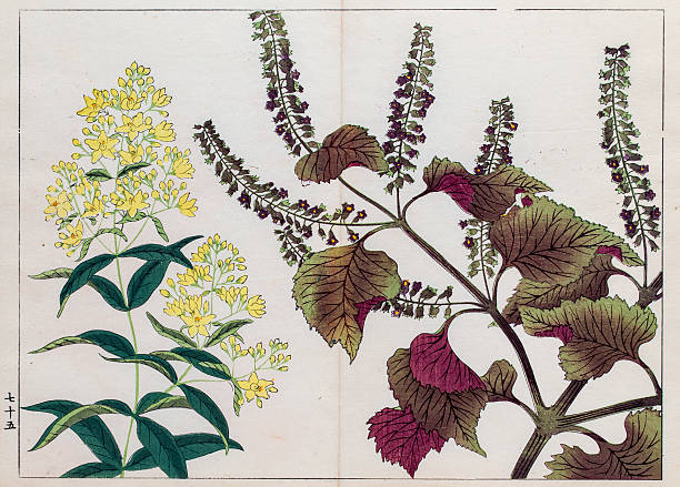 Perilla Plant Japanese Woodblock Print Wall Art