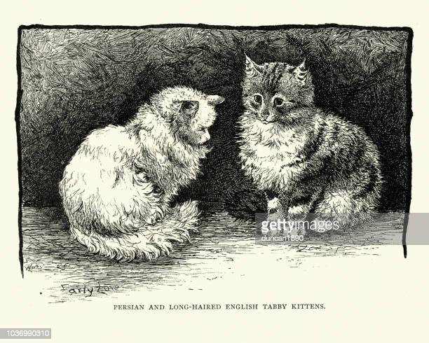 persian and longhaired englush tabby kittens - young animal stock illustrations, clip art, cartoons, & icons