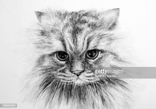 57 Persian Cat High Res Illustrations Getty Images