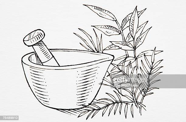 Mortar And Pestle Stock Illustrations and Cartoons | Getty Images