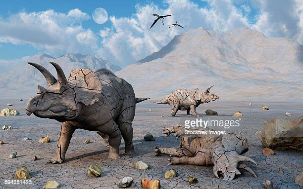 Petrified Triceratops dinosaurs from the Cretaceous Period.