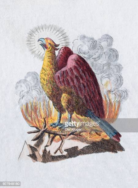 Phoenix, hand-colored copper engraving from childrens picture book by Friedrich Justin Bertuch, Weimar, 1792
