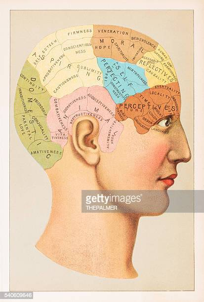 Phrénologie anatomie illustration 1891