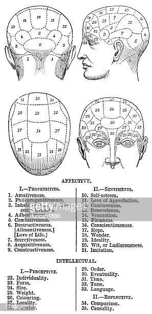 phrenology - medical diagram stock illustrations, clip art, cartoons, & icons