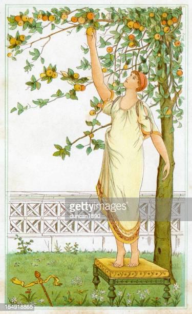 ilustrações de stock, clip art, desenhos animados e ícones de apanhar frutos laranjas - laranjeira