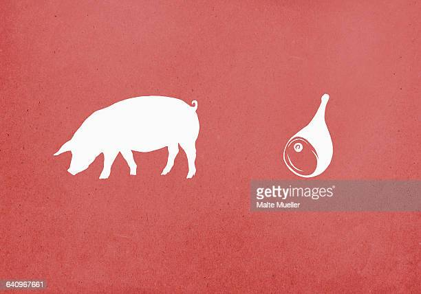 Pig and pork meat on red background