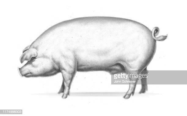 豚エッチング - ブタ点のイラスト素材/クリップアート素材/マンガ素材/アイコン素材