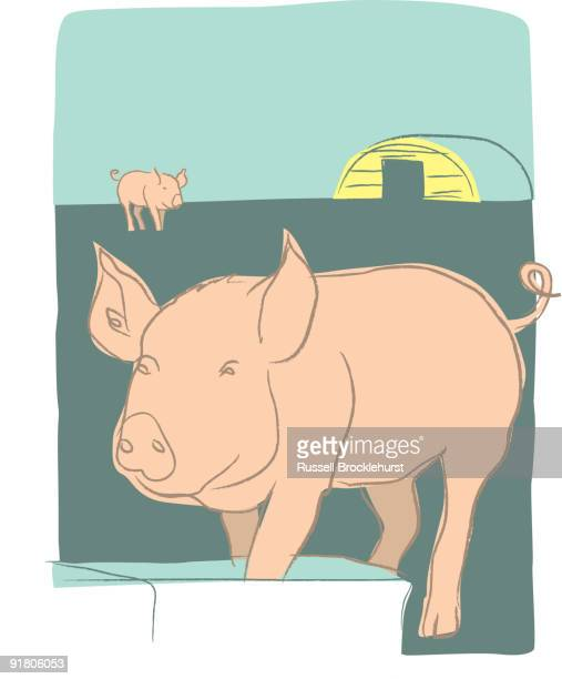 pigs at a trough on a farm - pigs trough stock illustrations