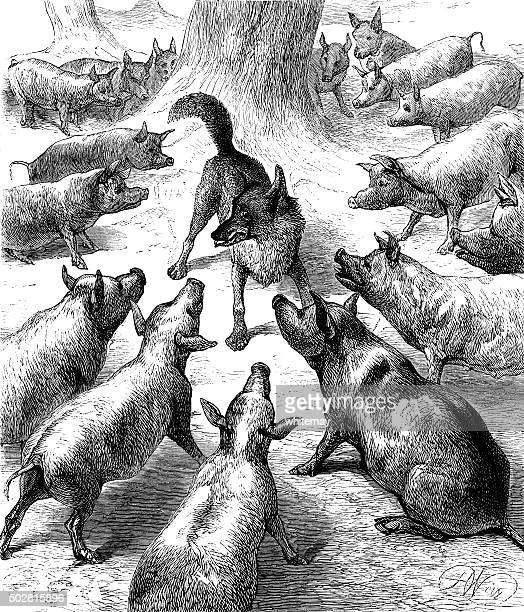 pigs surrounding a wolf - surrounding stock illustrations, clip art, cartoons, & icons