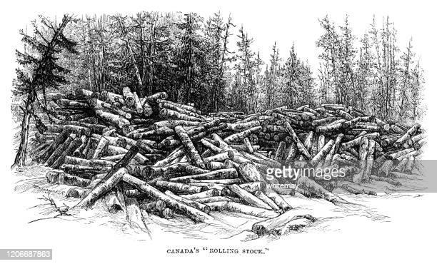 ilustrações de stock, clip art, desenhos animados e ícones de piles of logs in canadian logging country - desmatamento
