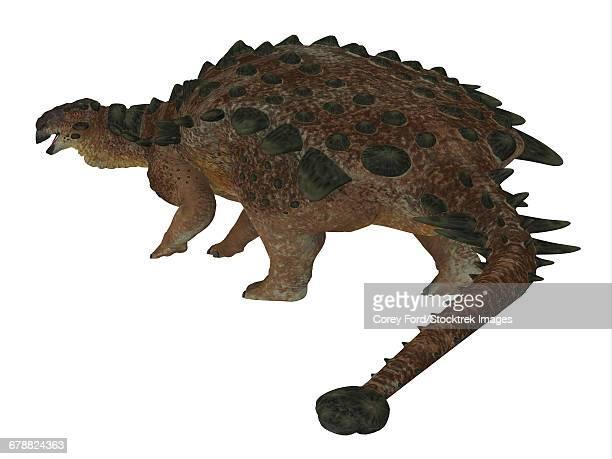 pinacosaurus dinosaur on white background. - scute stock illustrations, clip art, cartoons, & icons