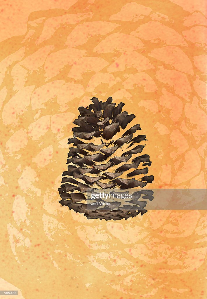 Pine Cone : Stockillustraties