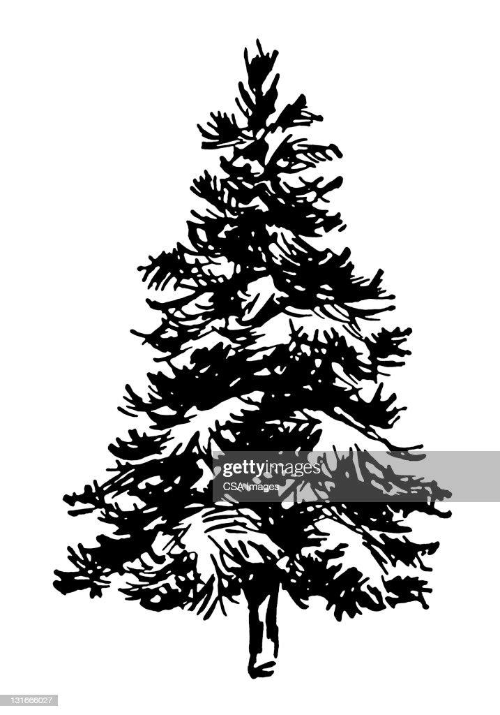 Pine Tree : stock illustration