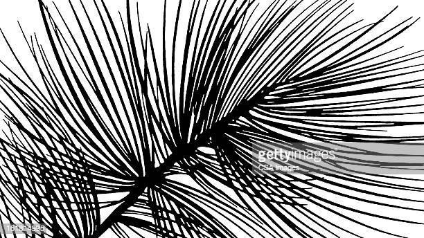 pine tree needles - branch stock illustrations